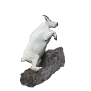 Mountain Goat, Rock Climbing