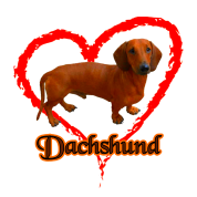 Dachshund Weiner Dog Love