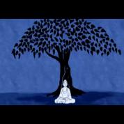 buddhatouchgrown
