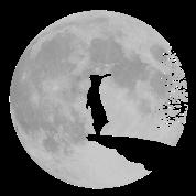 werewolf bunny bunnies rabbit hare moon fullmoon howl