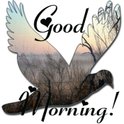 good_morning_dove_orig1_copy