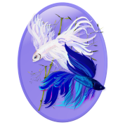 Blue 'n' White Siamese Fighting Fish Oval
