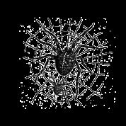 spidernweb