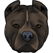 Pitti Pitbull head with many details