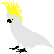 Cockatoo, Real Punk, Parrot