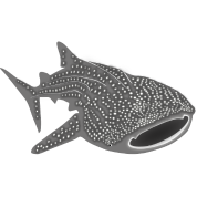 save the whale shark sharks fish dive diver diving endangered species