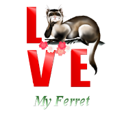 Love My Ferret