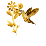 Gold Hummingbird