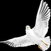 Bird - Dove - Peace