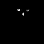 A dark owl