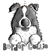 Sweet Border Collie - Dog - Dogs
