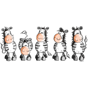 Herd Of Funny Zebras - Zebra