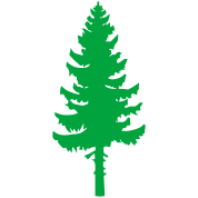 tall pine green tree