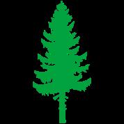 tall pine green tree
