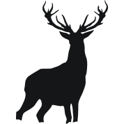 Deer with antlers