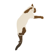 Leaping Siamese Cat
