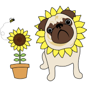 Sunflower Pug