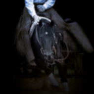 Roeschmann-Cutting-Horses